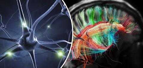 Az agyban felfedezett különös struktúrák rejthetik a túlvilághoz vezető kulcsot: ezek tárolják az emberi tudatot és a lelket!