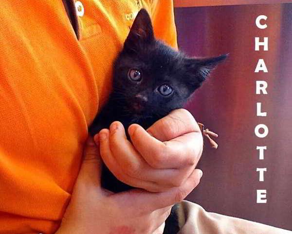 gatita abandonada en adopción