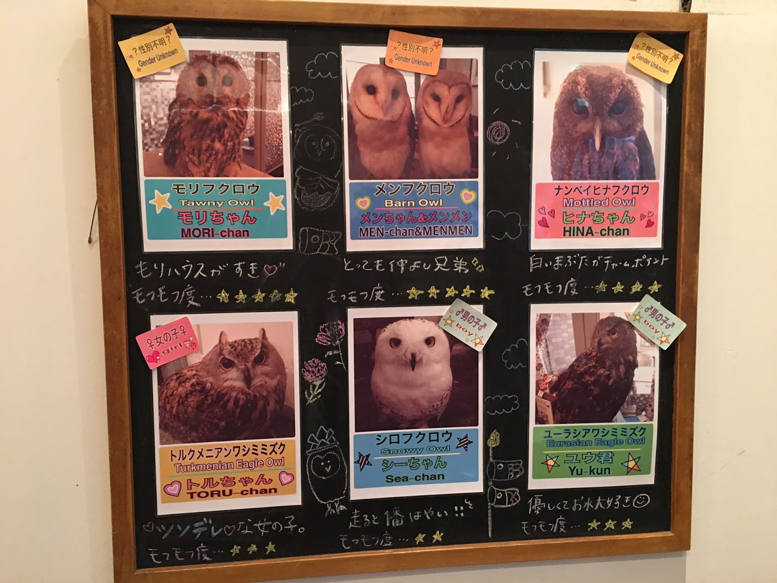 6 Reasons Why You Should Visit THIS Owl Cafe in Tokyo Japan