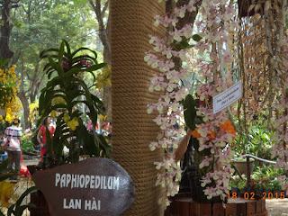 Hoa lan