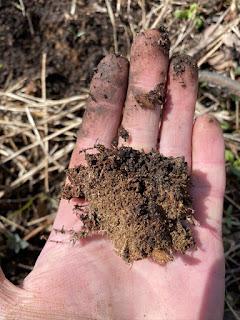 Handful of Soil Full of Mycelium