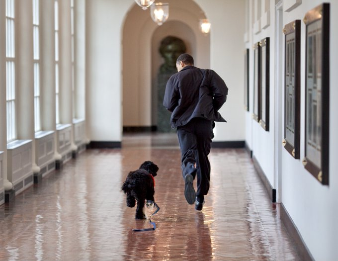 Obama family dog Bo dies following battle with cancer, Barack and Michelle Obama post tributes