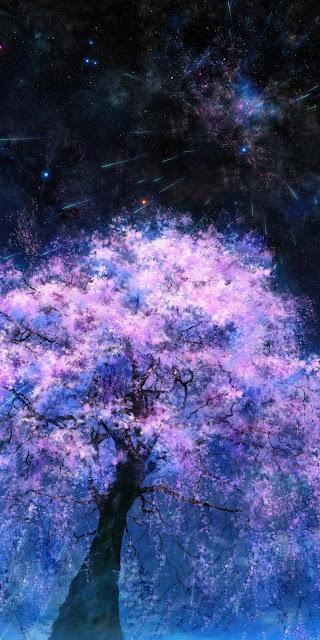 Hoa anh đào dưới bầu trời đêm