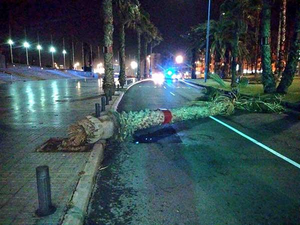 Foto de la palmera tirada por el fuerte viento altura Auditorio Alfredo Kraus, Las Palmas de Gran Canaria