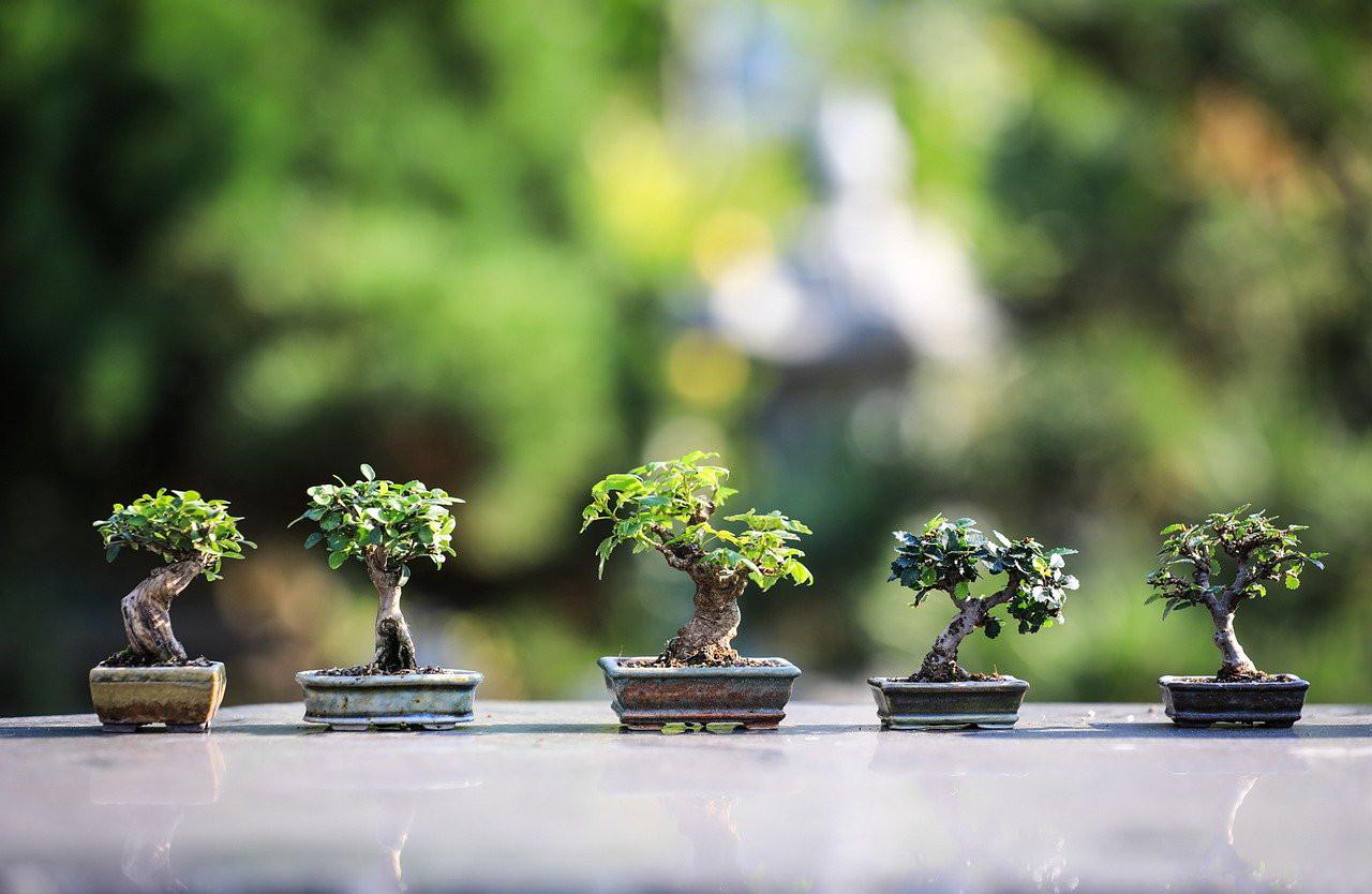 contoh-membentuk-bonsai.jpg