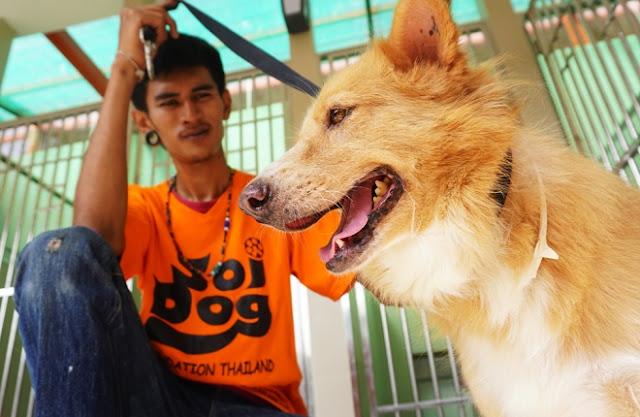 Là tổ chức cứu hộ chó mèo lớn nhất Đông Nam Á, Soi Dog đang nuôi dưỡng gần 1.000 con chó, mèo được giải cứu từ nhiều tình huống, như: tai nạn giao thông, vùng dịch bệnh, bị đối xử tàn tệ... Chó được giải cứu nhiều nhất từ các đường dây buôn lậu xuyên quốc gia, mà đích đến cuối cùng là những đất nước ăn thịt chó như Trung Quốc, Việt Nam.