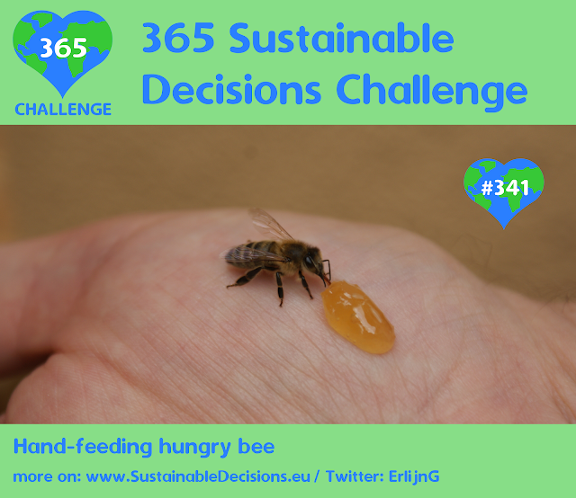 Hand-feeding hungry bee, Saving insects, sustainable living, climate action, sustainability