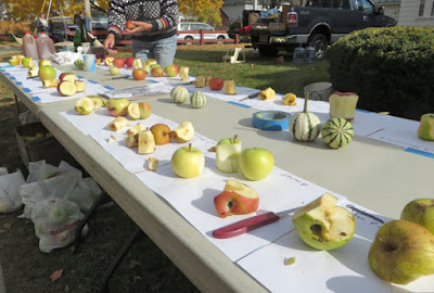 A long tasting table, with scores of different apples.