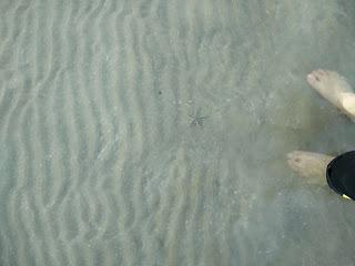 Pantai Sepat, kuantan, pantai, shaklee malaysia, starfish, tapak sulaiman