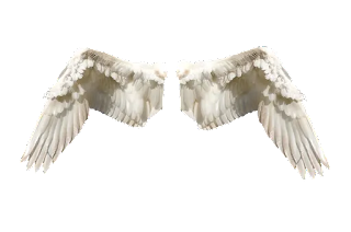 image of wings, image of angel wings, image of angel