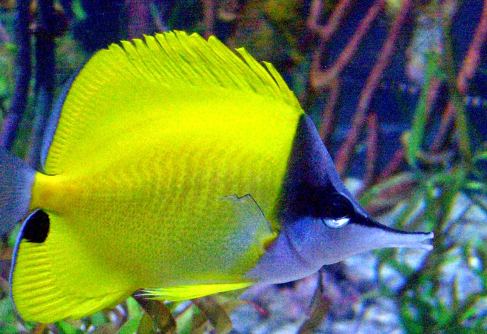 Koralliriutan Eläimiä