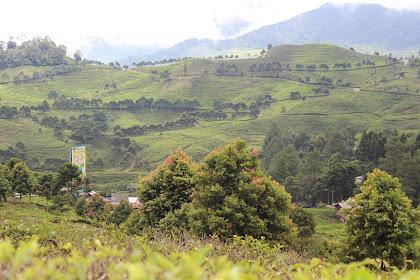 Pass Puncak - Bogor, Objek Wisata Kebun Teh Yang Indah