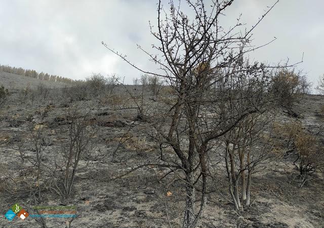 Ο Φορέας Διαχείρισης Πάρνωνα για την πυρκαγιά της 24ης Νοεμβρίου στον Άγιο Πέτρο Αρκαδίας