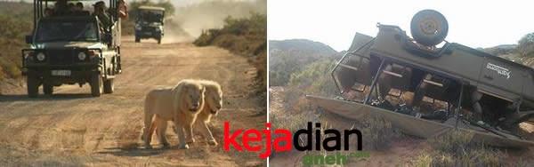 Singa menyerang sepasang Remaja Zimbabwe yang sedang bercinta di Hutan