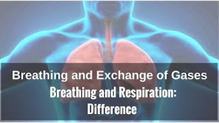BREATHING AND EXCHANGE OF GASES HAND WRITTEN NOTE