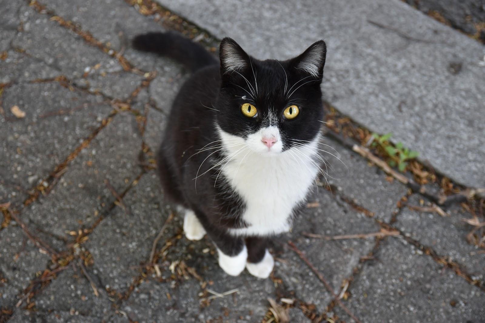 toulavá kočka na ulici