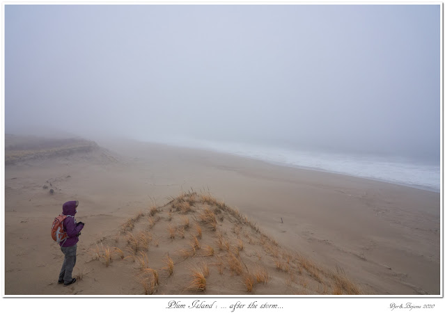 Plum Island: ... after the storm...