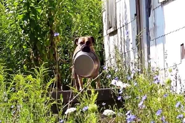 Abandoned Dog Brings Empty Bowl From Door To Door Hoping Somebody Will Feed Him
