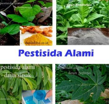 20 Pestisida Alami Dari Bahan Sederhana