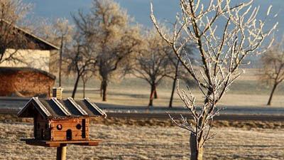 Photo of frosty bird feeder by Franz W from Pixabay