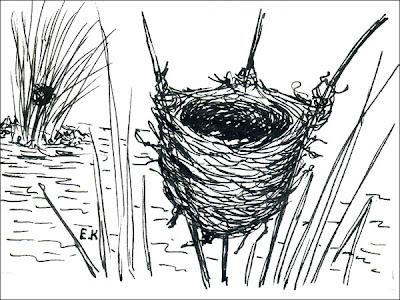 nido de Varillero congo Chrysomus ruficapillus