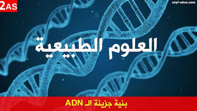 تحضير درس بنية جزيئة الـ ADN للسنة الثانية ثانوي