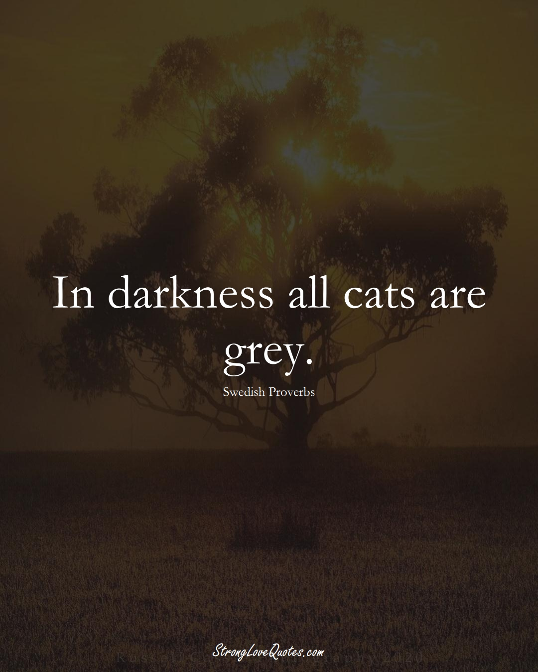 In darkness all cats are grey. (Swedish Sayings);  #EuropeanSayings