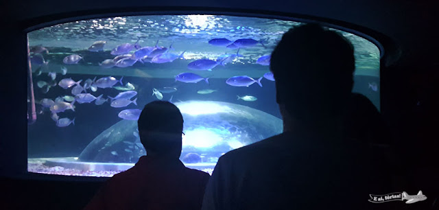 AquaRio, Aquario marinho do Rio, Rio de Janeiro