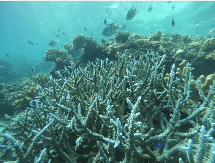 Rising Temperature Puts Deeper Corals In Peril