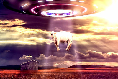 'Aliens' Mutilate Cow, Claim Rancher