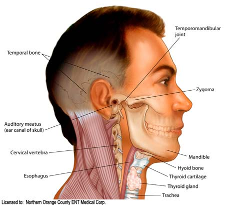 mastoid bone infection
