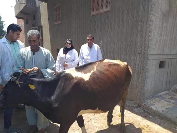 إختبار عدد 5537 رأس ماشية لمكافحـــة مــرض البروسيــلا و 3863 ضد مرض الدرن