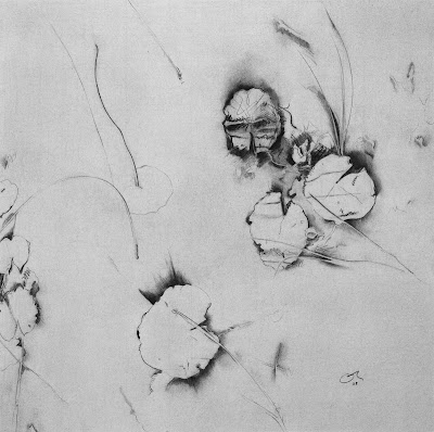 water lilies, lilies of Lake Calm, charcoal on BFK RIVES printmaking paper