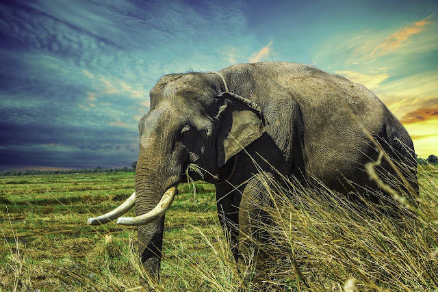 What is the Incredible Elephant Trunk