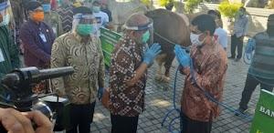 Jokowi Kurban 2 Ekor Sapi untuk Warga Yogyakarta di Idul Adha 2020
