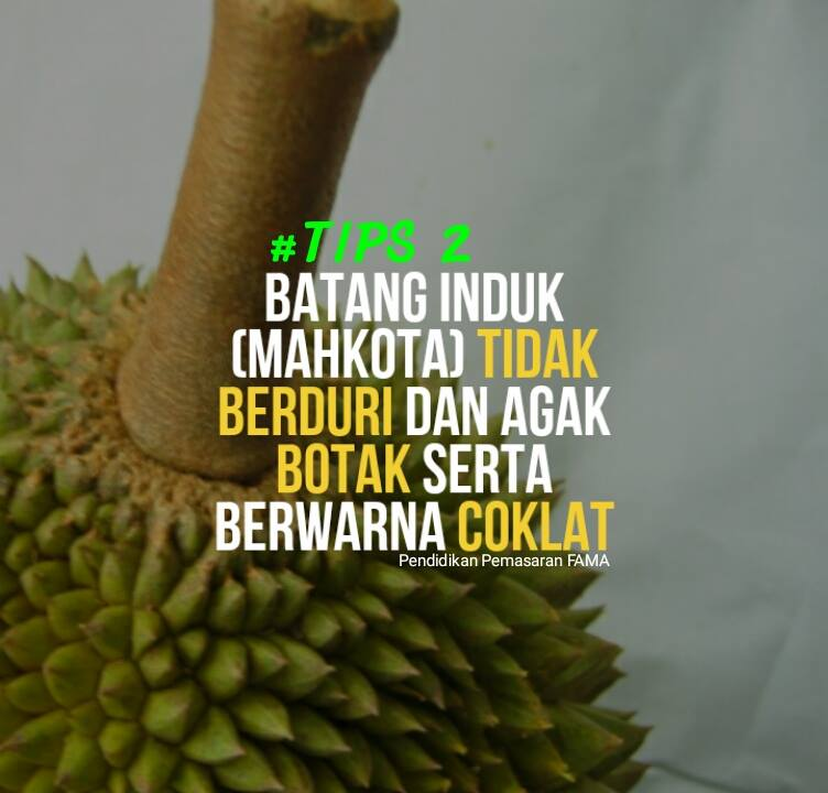 Tips 2 Mengenal Durian Musang King