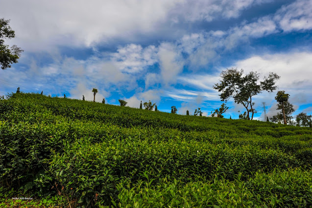Tham quan Đồi trà bảo Lộc - nhà máy trà King Lộ