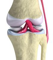 Ligament (sendi tulang)