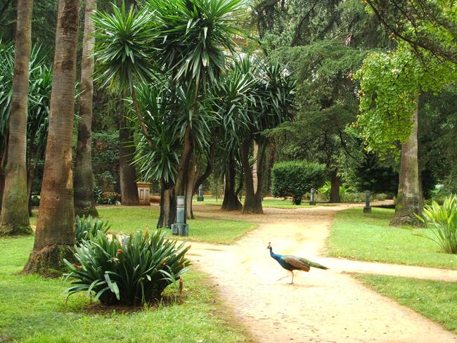 Jardines del alc zar de sevilla parte ii paisaje libre for Jardin botanico en sevilla