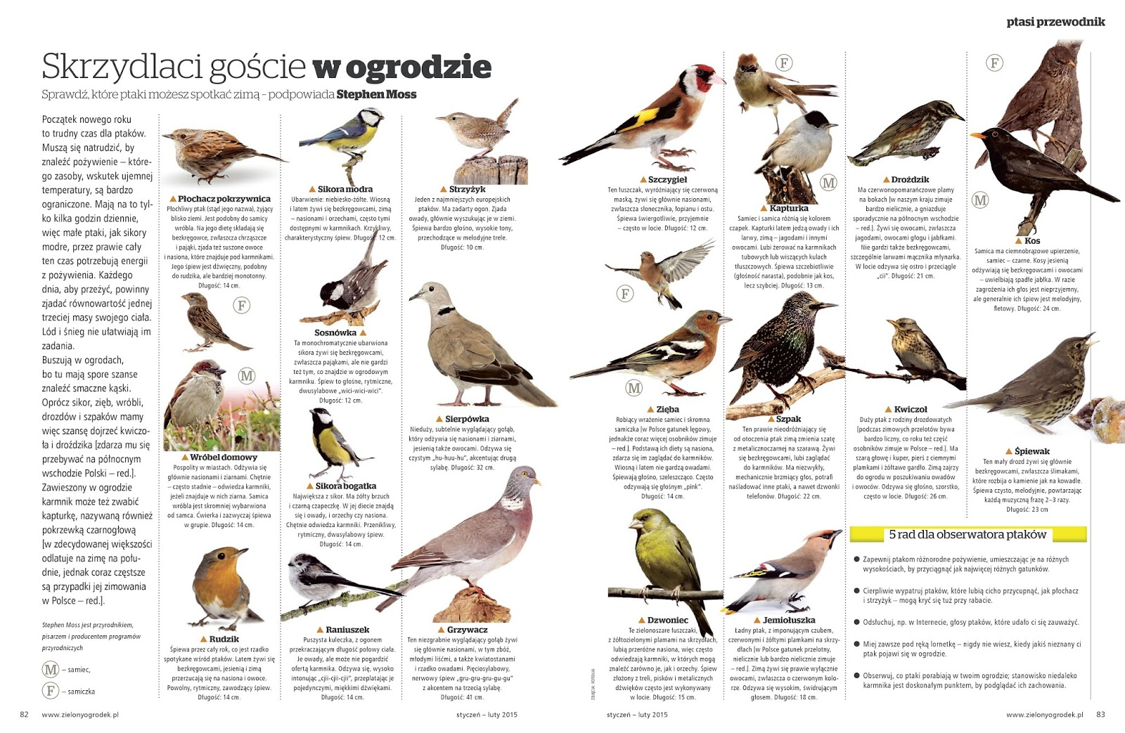 mieszanka dla ptaków, ogród przydomowy