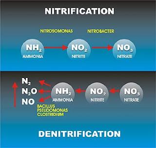 Nitrifikasi dan Denitrifikasi