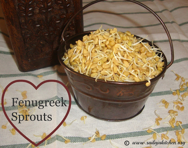 images of How to Sprout Fenugreek Seeds / How to Sprout Methi Seeds