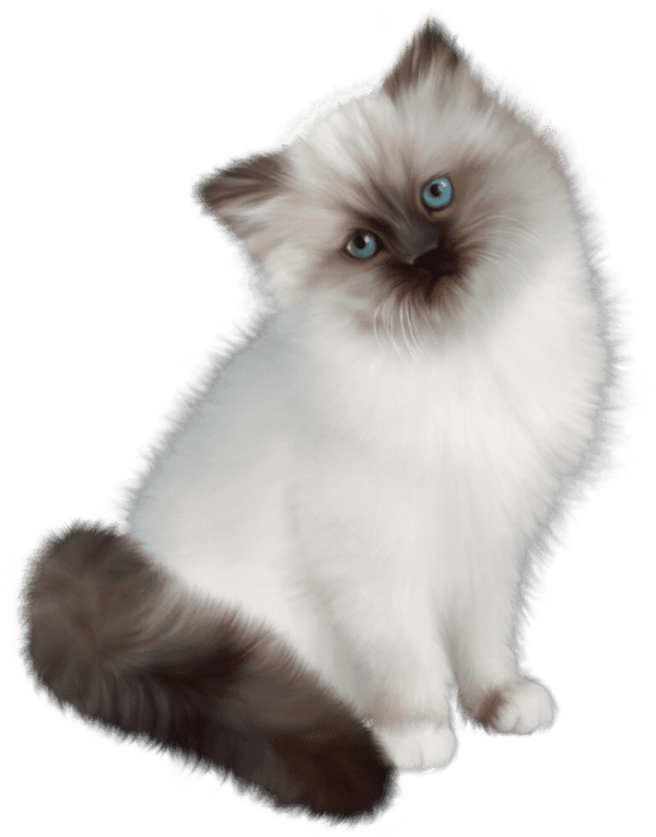 Zoom dise o y fotografia gatos y perros png pets mascotas for Red transparente para gatos