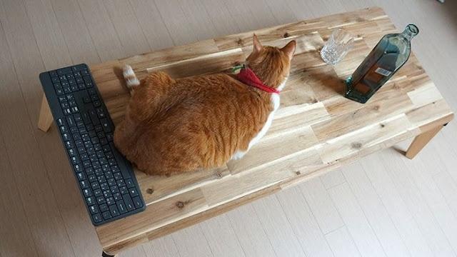 Móng vuốt của chú mèo cưng có thể làm xước mặt bàn