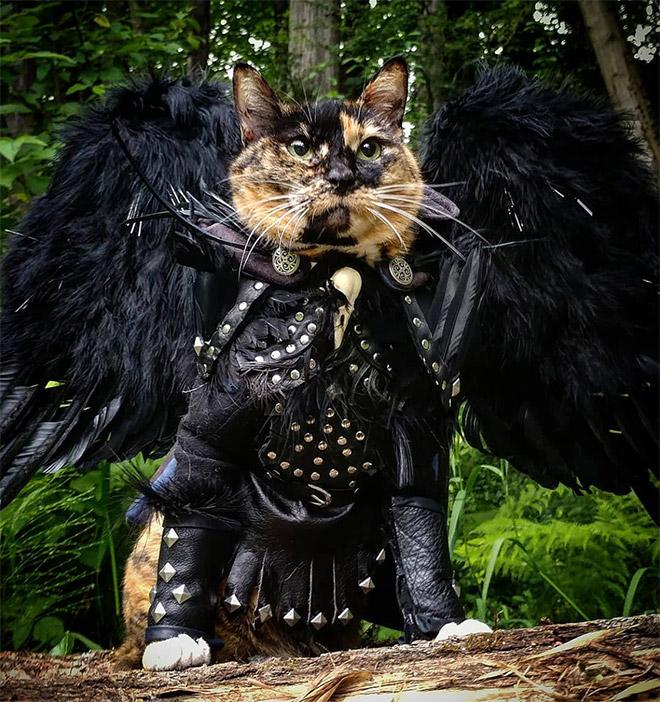 Gatos con armadura, adorables y preparados para la lucha.