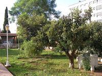 venta chalet castellon avda enrique gimeno jardin