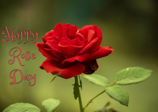 happy Rose day 2021 Images hd download