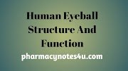 Internal Structure of eye and their function