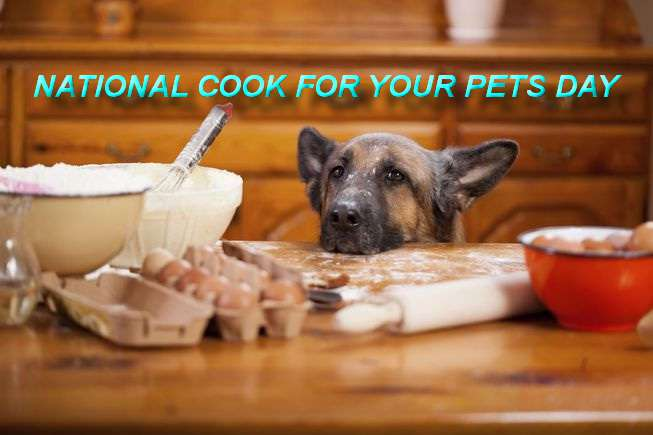 National Cook For Your Pets Day Wishes Awesome Picture