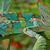 Chameleon change his colours, Really!